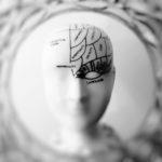 a replica of a human brain